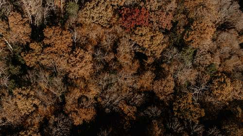 ground top-view photography of tree rock