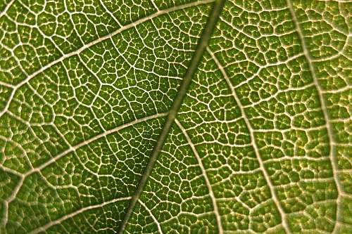 nature close-up photography of green leaf plant