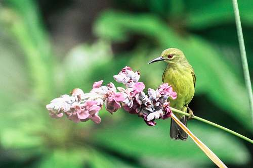 photo blossom green bird beside the pink flower flower free for commercial use images
