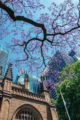 town low-angle photography of purple flowering tree outside a building sydney nsw
