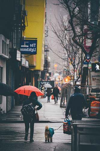 person people walking on street beside high rise buildings pedestrian