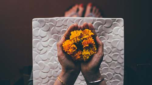 person person hand holding yellow flowers people