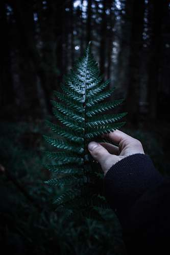 person person holding fern with shallow depth field people