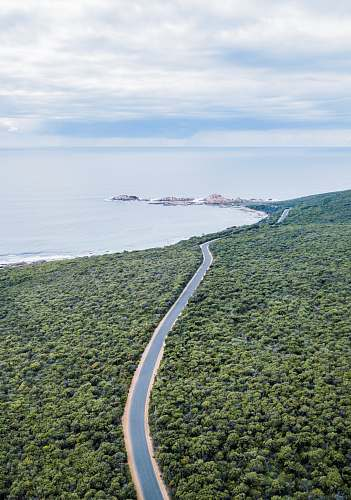 plant aerial photography of road surrounded with trees vegetation