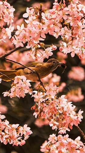 leaf bird perching on tree during daytime bird