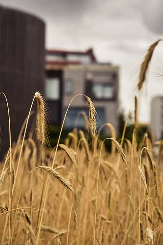 food brown wreath field grass