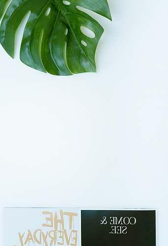 green green leaf plant leaf
