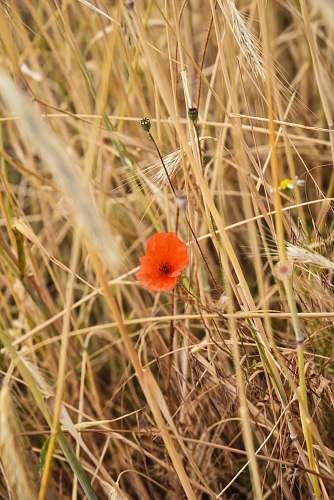 food orange flower macro photography produce