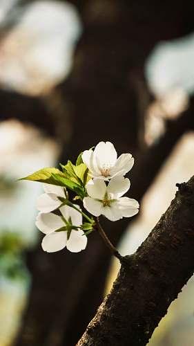 pollen white petaled flower flower
