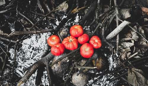 food orange tomato fruits fruit