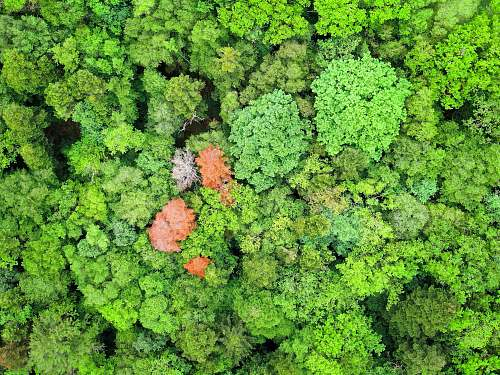cabbage aerial photography of orange and green leafed trees kale