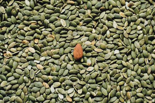 bean almond seed on top of green seeds flora