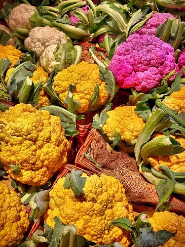 plant assorted-color cauliflowers vegetable