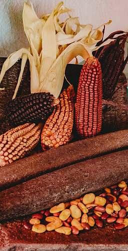 plant assorted-color corns corn