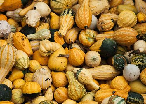 vegetable assorted-color gourds squash