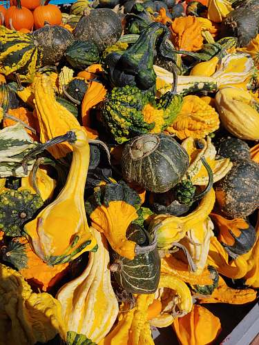 gourd assorted-color squash plant