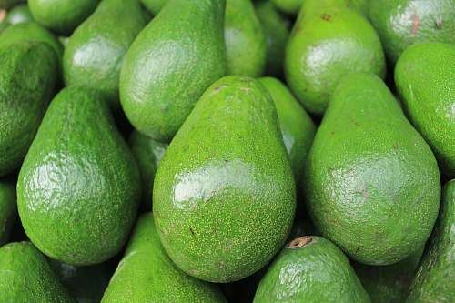 green avocado fruits vegetable