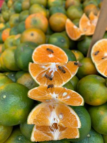 plant bees on lemon slices citrus fruit