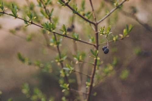 fruit black fruits blueberry