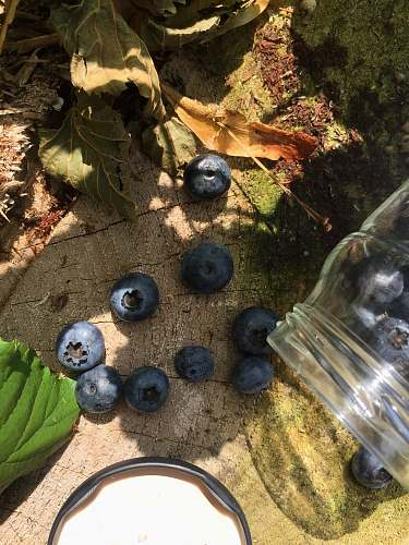 fruit blue berries near cut glass blueberry
