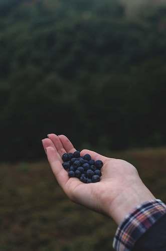 fruit blue berries on left human hand blueberry