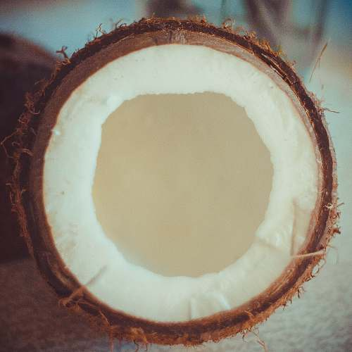plant brown coconut shell nut