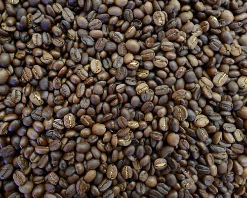 photo bean brown coffee beans flora free for commercial use images