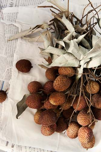 seed brown fruits on white textile flora