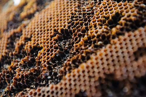 honeycomb brown honeybee honey
