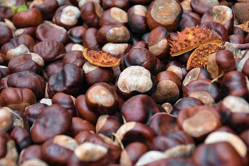 plant brown nuts vegetable