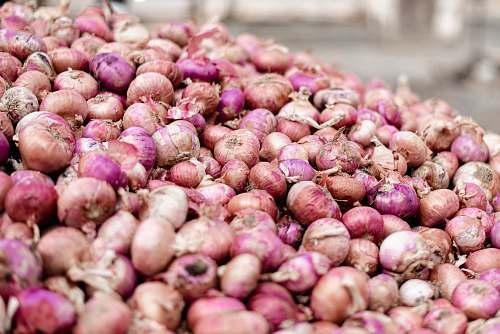 plant brown onion lot onion