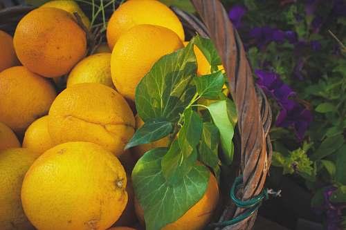fruit bunch of orange fruits in basket citrus fruit