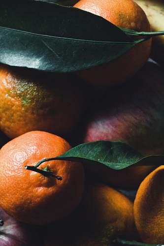 plant bunch of oranges citrus fruit