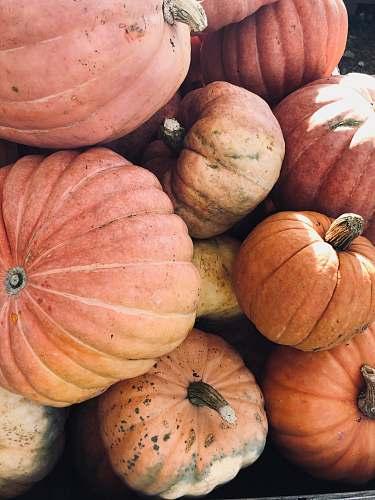 plant bunch of pumpkins pumpkin