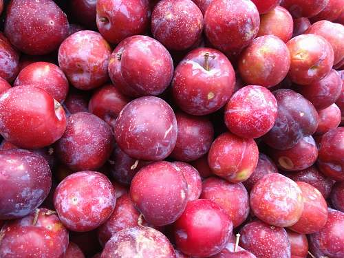 fruit bunch of round red fruits plum