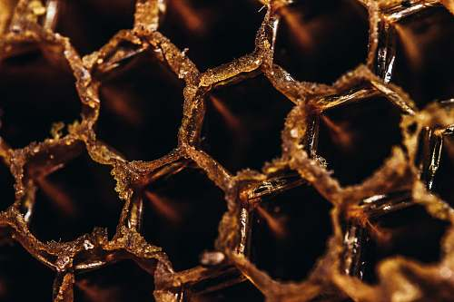 honeycomb close-up photography of bee hive honey