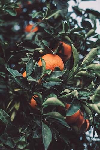 fruit close up photography of orange fruit citrus fruit