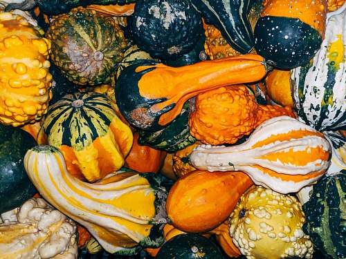 plant closeup photo of squash vegetable