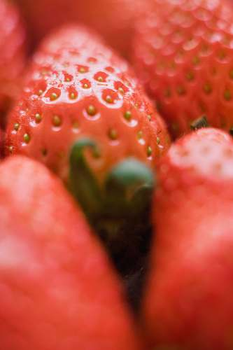 fruit closeup photo of strawberry plant