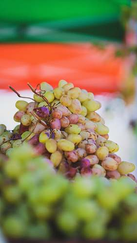 fruit cluster of grapes grapes