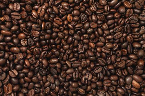 vegetable coffee beans plant