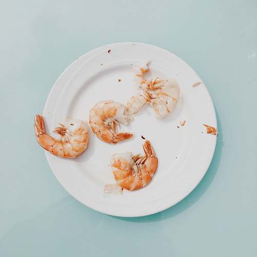 animal cooked shrimps on white plate shrimp