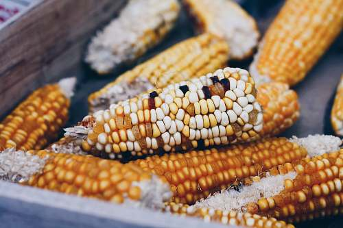corn corns on black surface vegetable