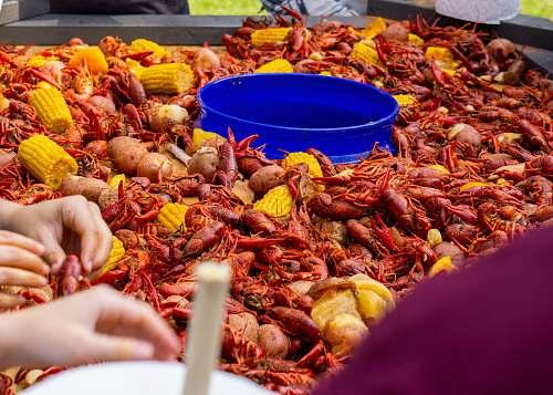 animal crabs and corns sea life