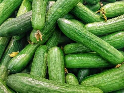 vegetable cucumber lot cucumber