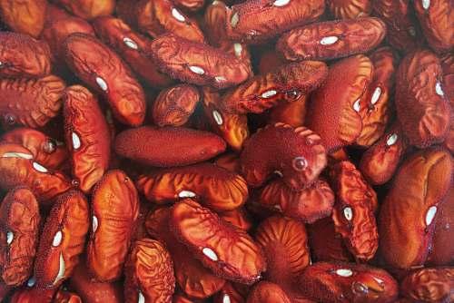 bean dried brown seeds human