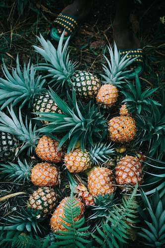 pineapple flat-lay photography of bunch of ripe pineapples fruit