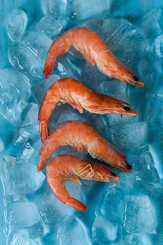 shrimp four shrimps on top of ice seafood