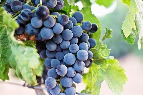 grapes grapes fruit