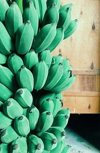 fruit green banana plant